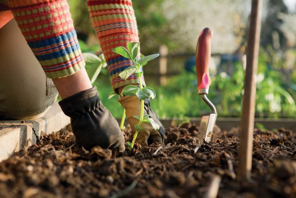 gardening-soil health-soil-landscaper-landscape designer