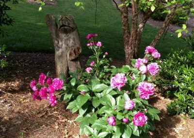 Peonies and a Welcome Bear