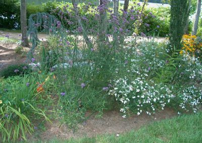 Get Rid of Your Ugly Weeds and Replace with Perennial Beds