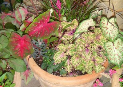 caladiums-administrative assistant services-Asheville