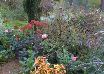 coleus-dahlias-Autumn Joy sedum-Russian sage-landscape design