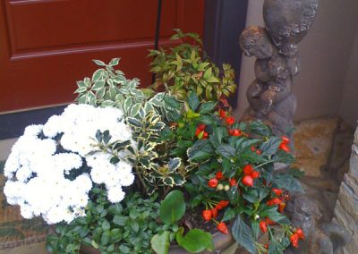 container garden-offshoot virtual landscape services