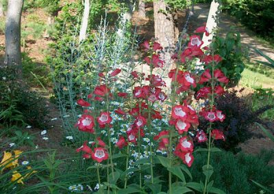 penstemon-virtual office assistant
