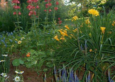 perennial design garden-landscape designer