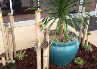succulent garden-landscape design-administrative services
