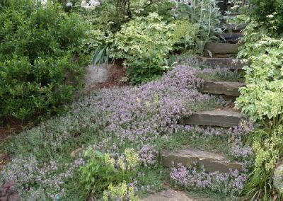 thyme-stone steps-virtual landscape services