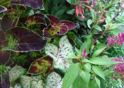 Foliage plants-containers-landscape designer
