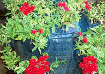 Red geraniums in blue cobalt pot