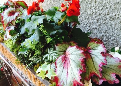 Fancy leaved begonias add texture, shapes and colors to the mix.