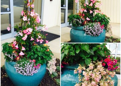 Add climbers to the container garden...