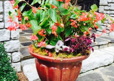 Shade container gardens with color