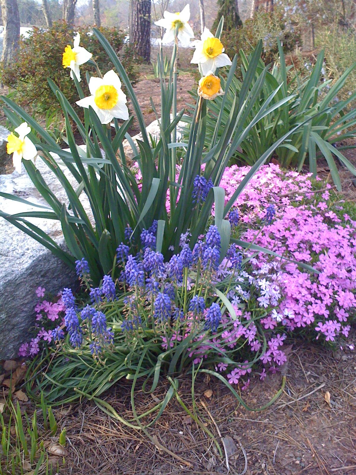 Flower Garden Color Schemes Landscape Designer Local