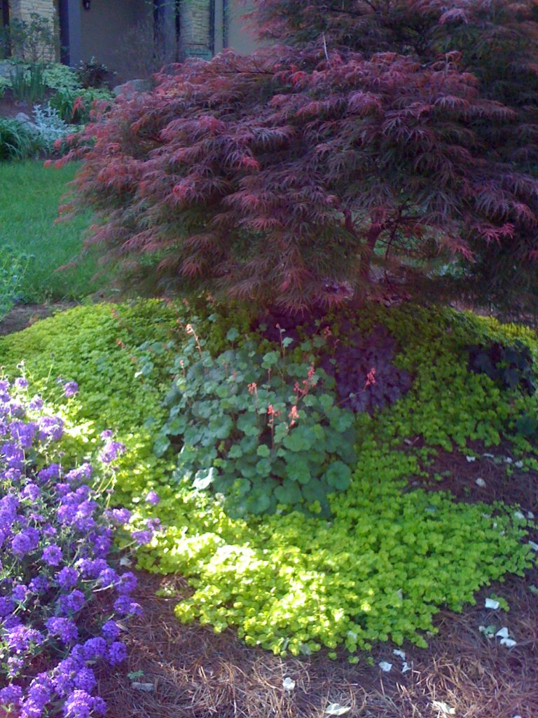 color scheme of burgundy plants with chartreuse