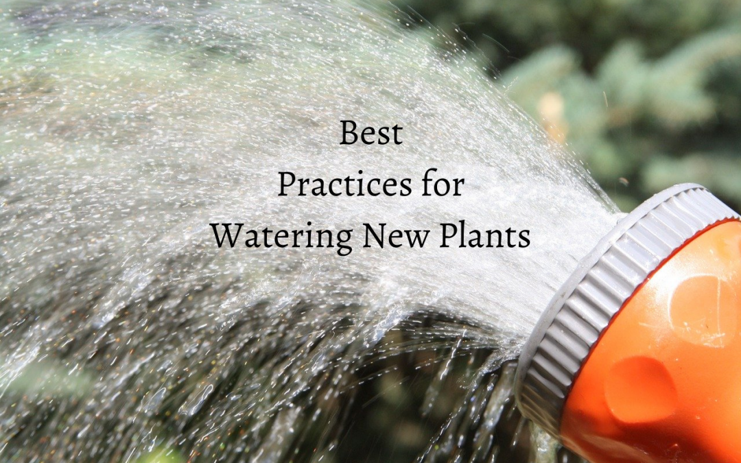 Best Practices for Watering New Plants